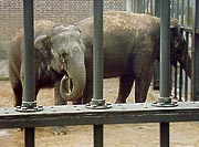 Cagedelephants[1]